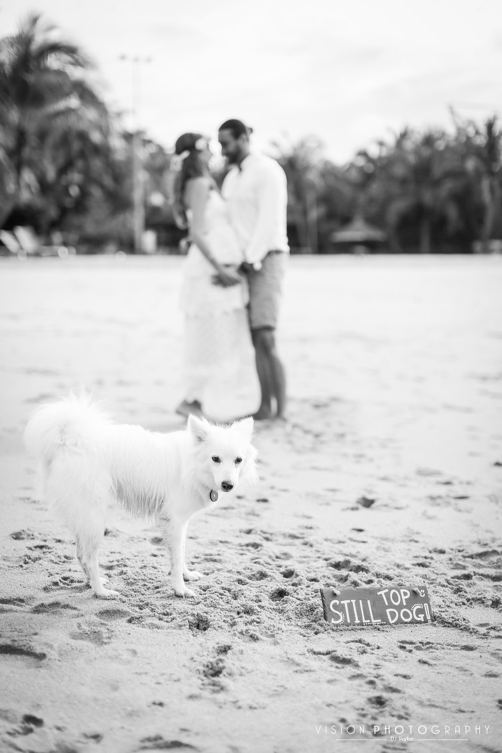 Outdoor maternity sentosa black and white with dog