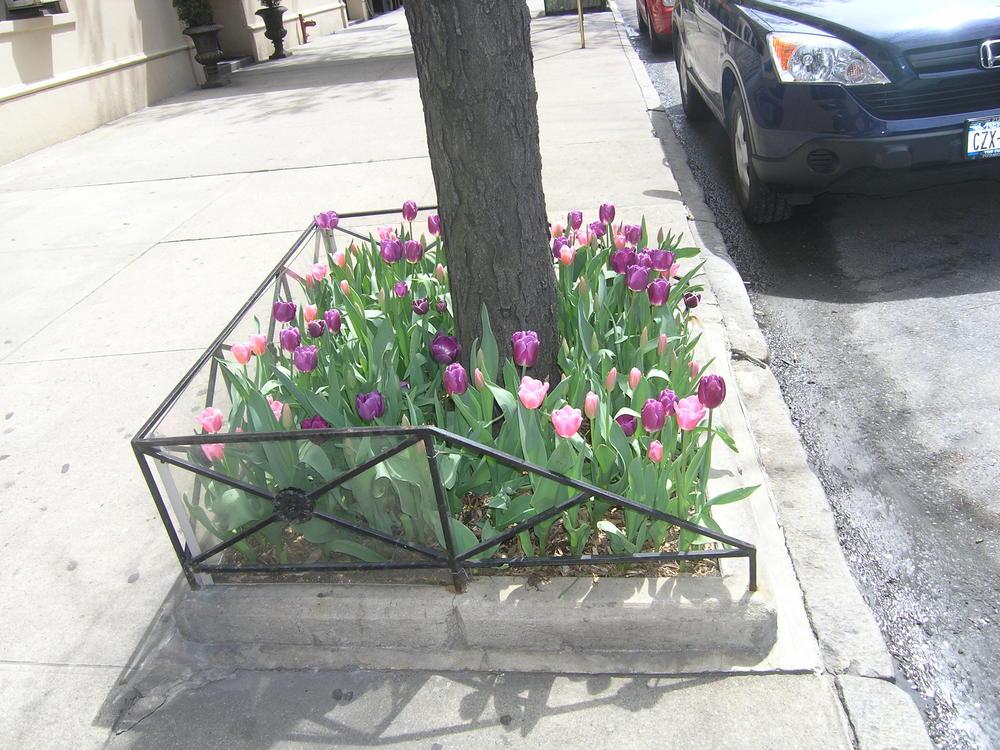 ADR Bulbs spring 2011 003.jpg