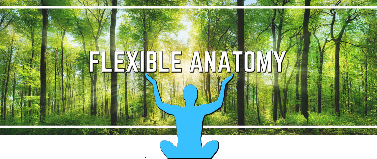 Flexible Anatomy