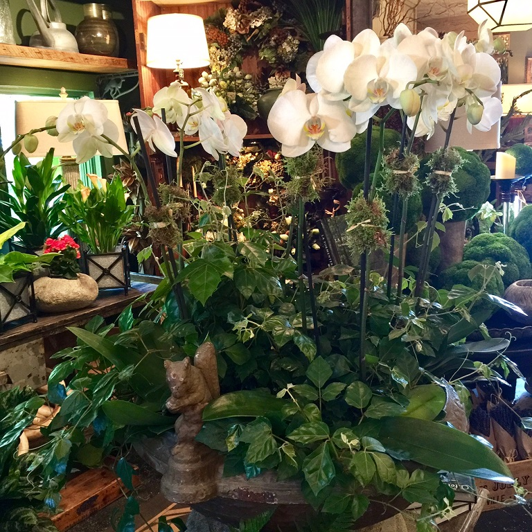 - Orchids paired with trailing grape leaf ivies will transform any room into an oasis.  Find a large water-proof container (or add your own plastic liners to the bottom).  Add an orchid or two or three or four ;) and then nestle in as many ivies as will fit around the orchids to achieve this stunning look! Make sure to keep the orchids and ivies in their own growers' pots, as they will need to be watered separately.