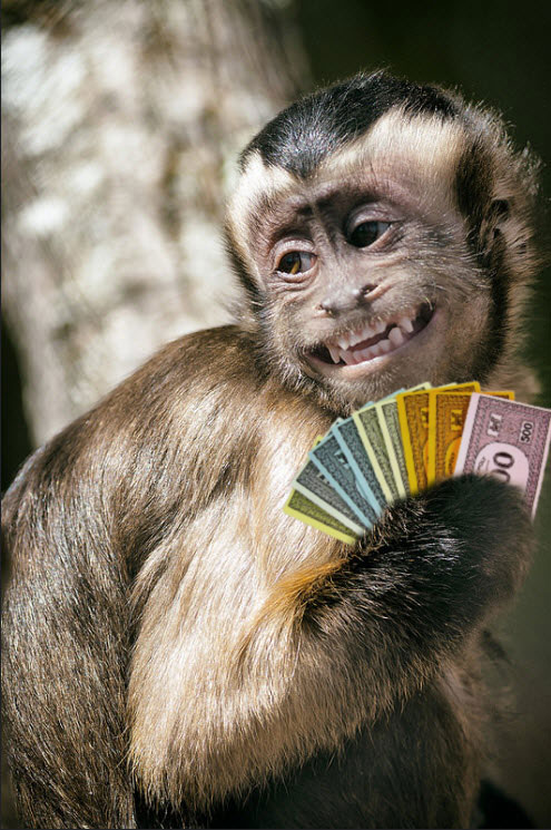 How Monkeys Use Money