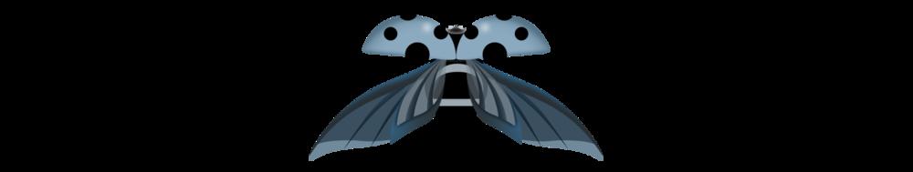 ladybug-bug.jpg