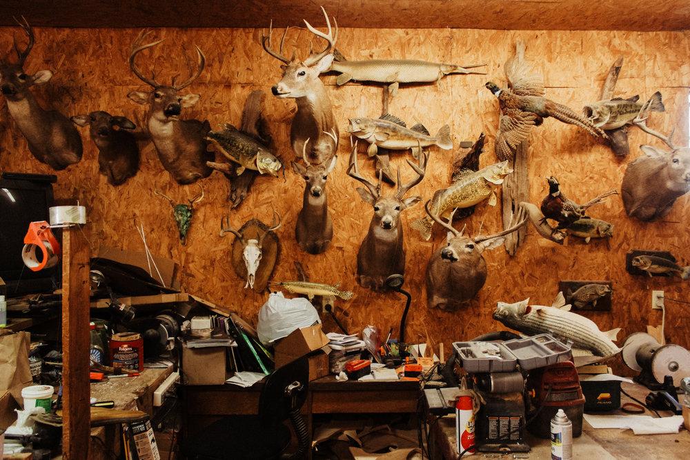 A wall in Sherman Johnson's taxidermy workshop.