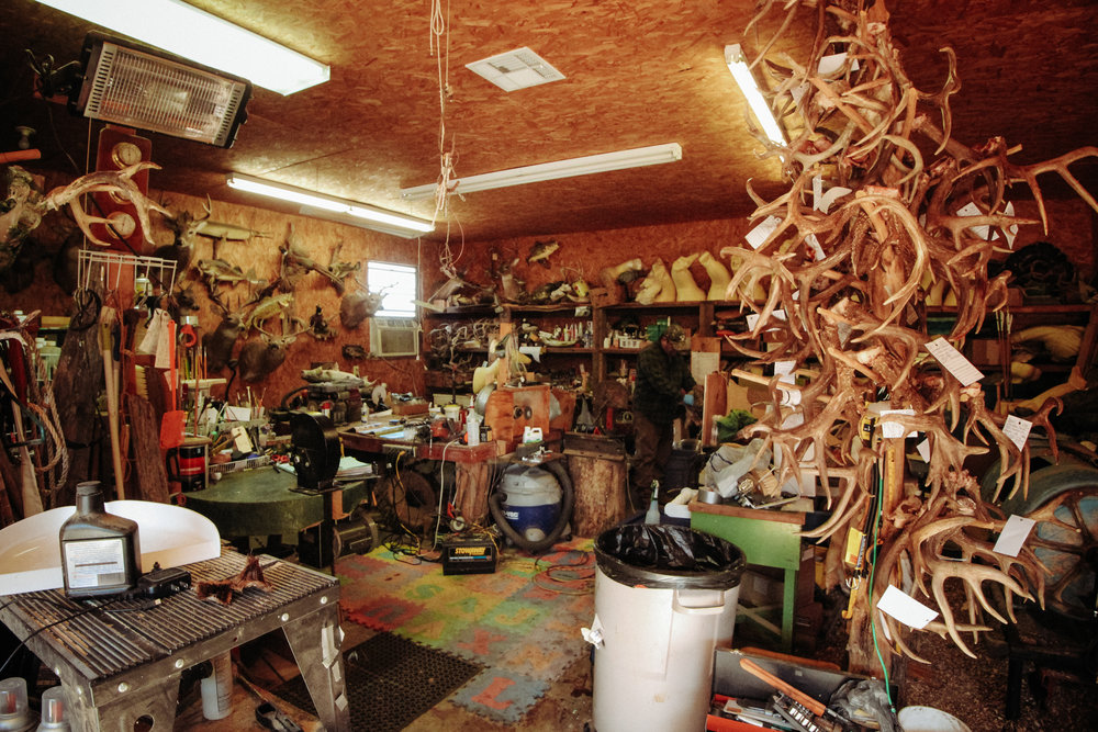 Sherman's taxidermy workshop. The column of antlers on the right is his collection of client projects for the winter.
