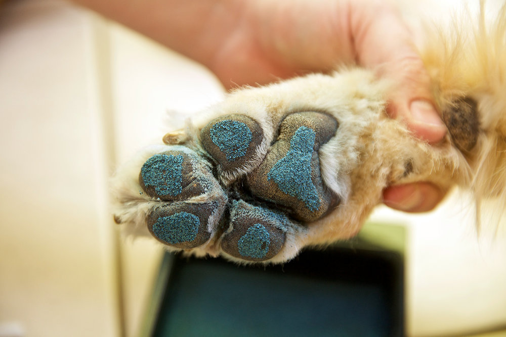 Paw With PawFriction!