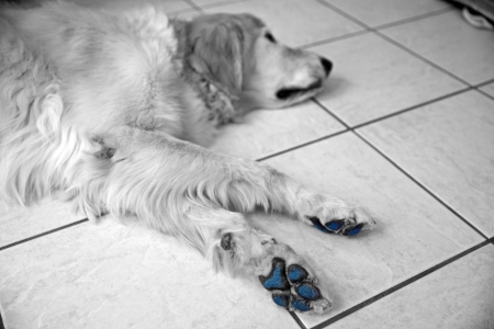 Black and white with blue paw1.jpg