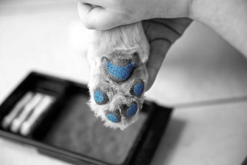 DogPaw_Blue.jpg