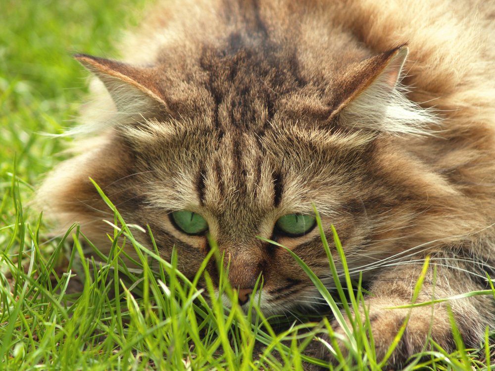 cat-portrait-with-green-eyes-matching-green-background.jpg