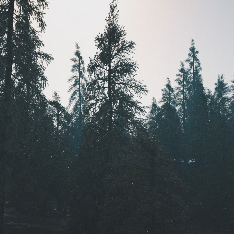 FOGGY HILL - CINEMA4D R18 & OCTANE 3.xPLUGINS: FORESTER