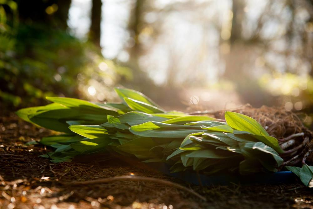 Ramps in the Sunlight.jpg