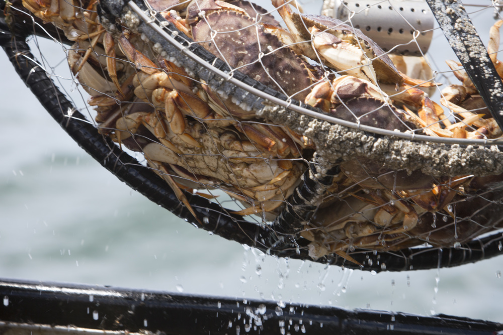 Dungeness Crab Fishing 160.jpg