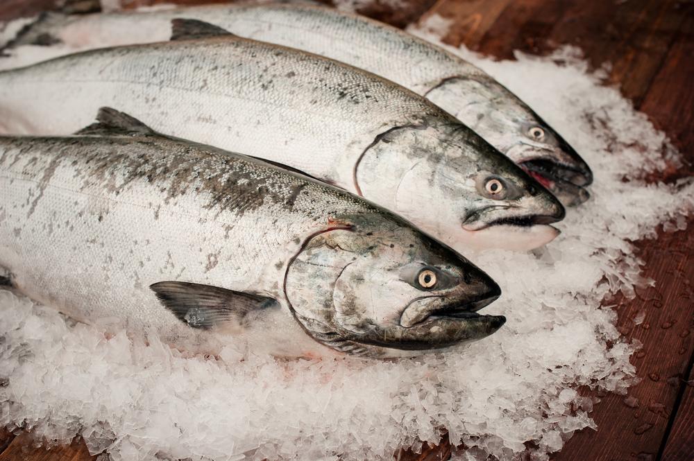 Salmon-0366.jpg