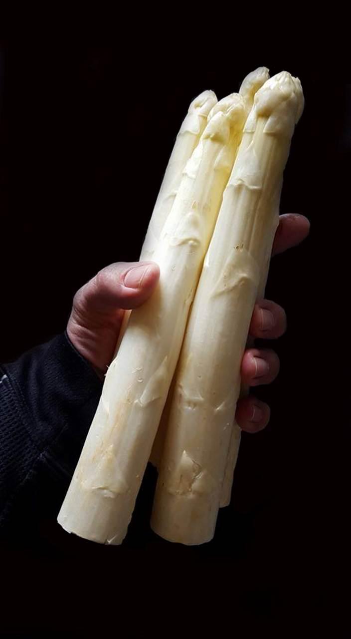 AAA White Asparagus