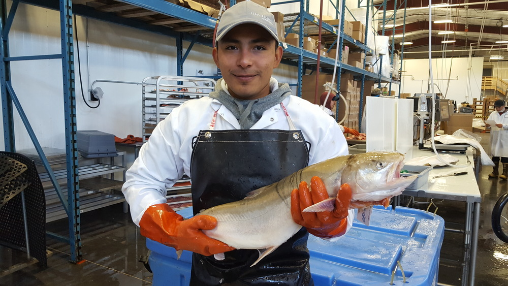 Real arctic char
