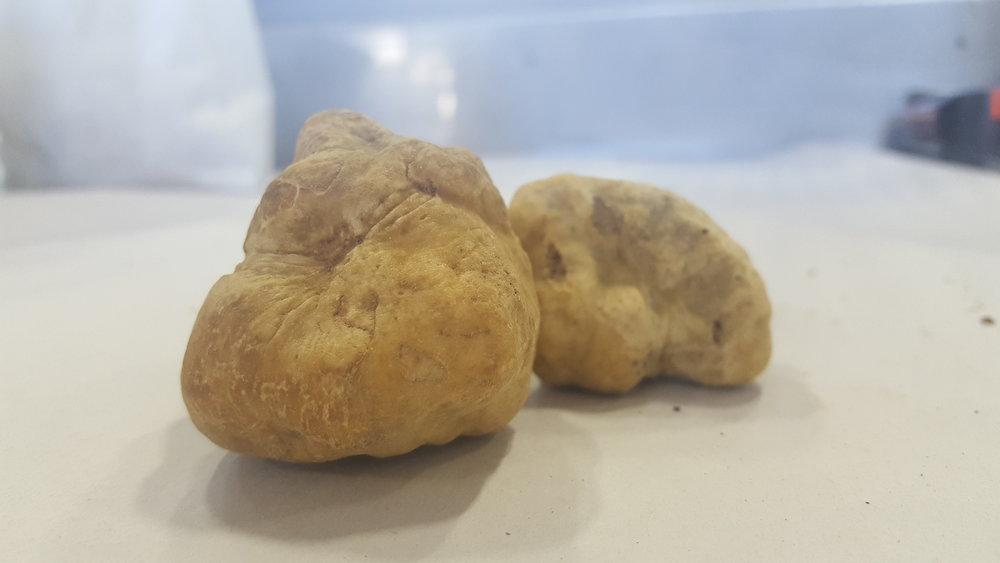Alba Truffles