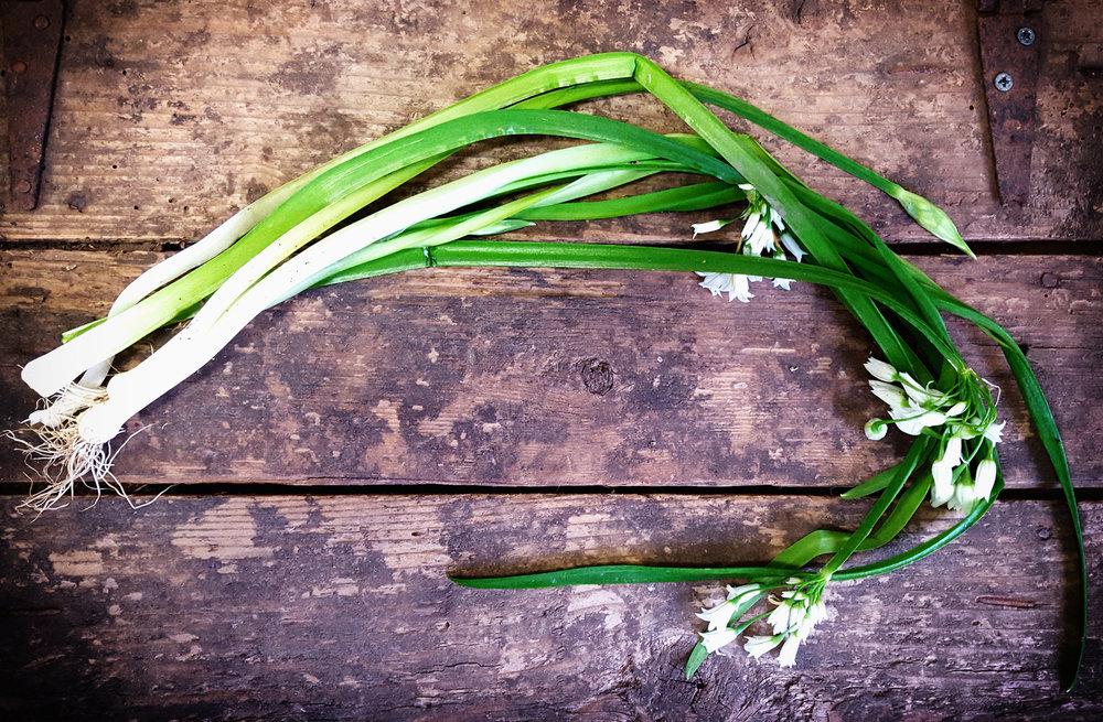 Wild Spring Onions