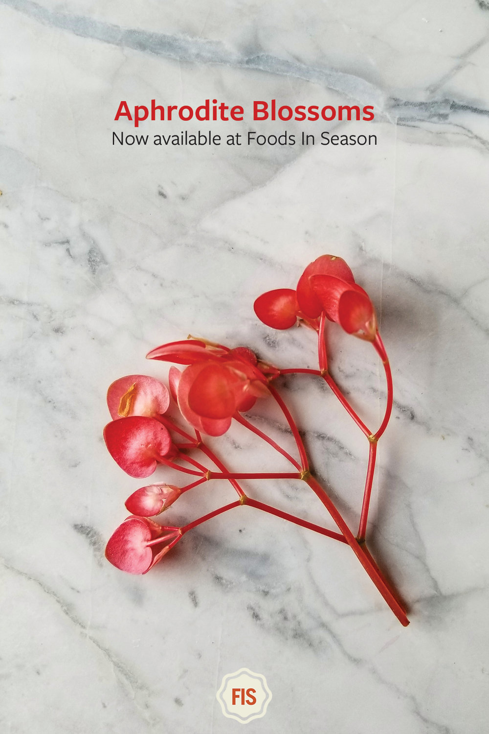 Aphrodite Blossoms only at Foods In Season