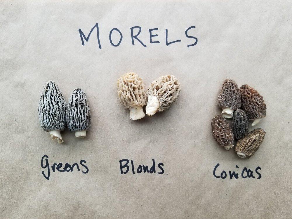Mo' Morels