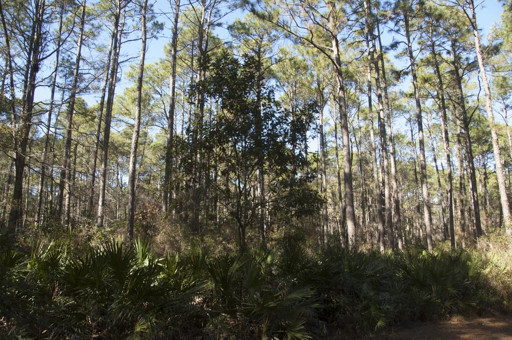 Victoria Bluff HP Trail_byDLucas_042.JPG