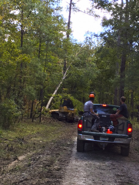 chainsaw crew follows a bulldozer into the interior of the Webb Center property, where numerous trees were downed by Hurricane Matthew.