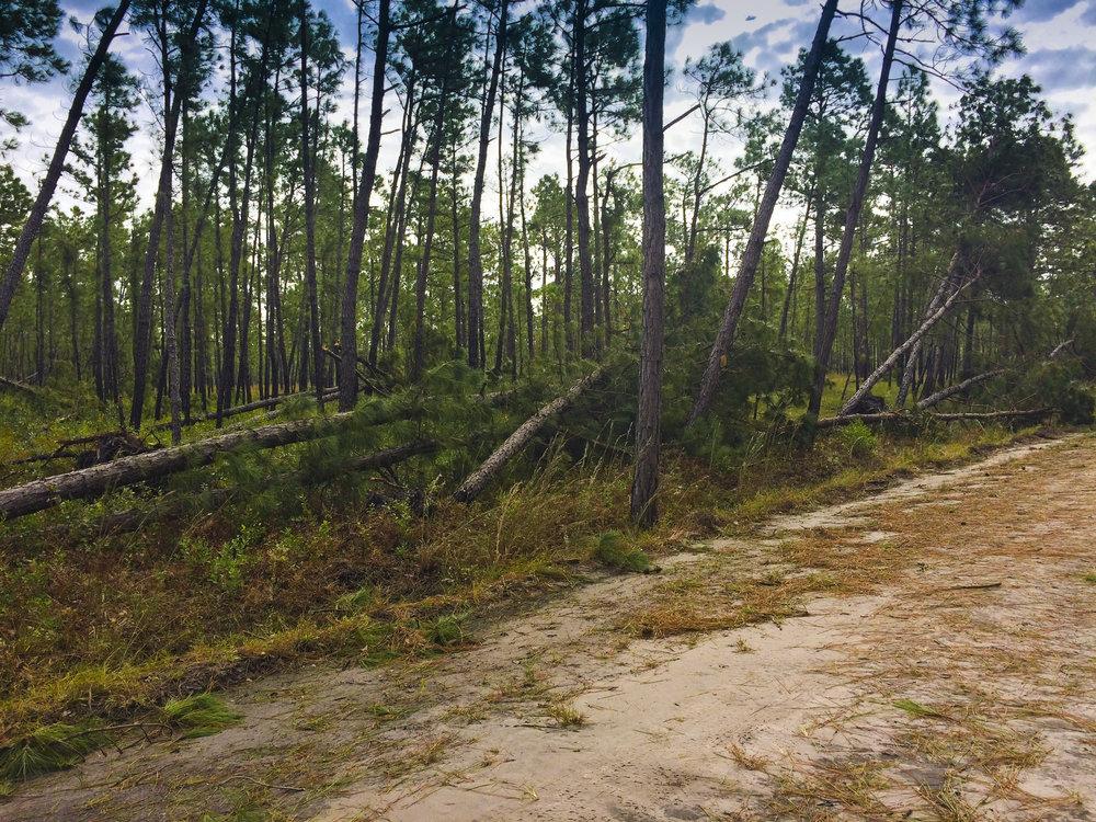 LOB Timber Damage_SCDNRPhoto.JPG