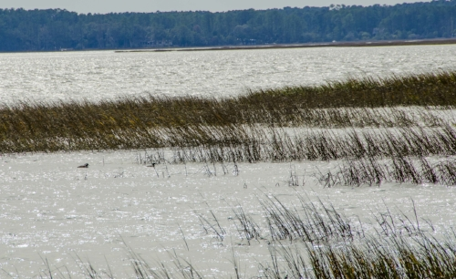 The Okatee River is at the upper reaches of the Colleton River, one of the estuaries at the head of Port Royal Sound.