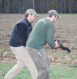 Wightman (right) and SCDNR biologist Jay Cantrell prepare to release a transmitter-tagged turkey.