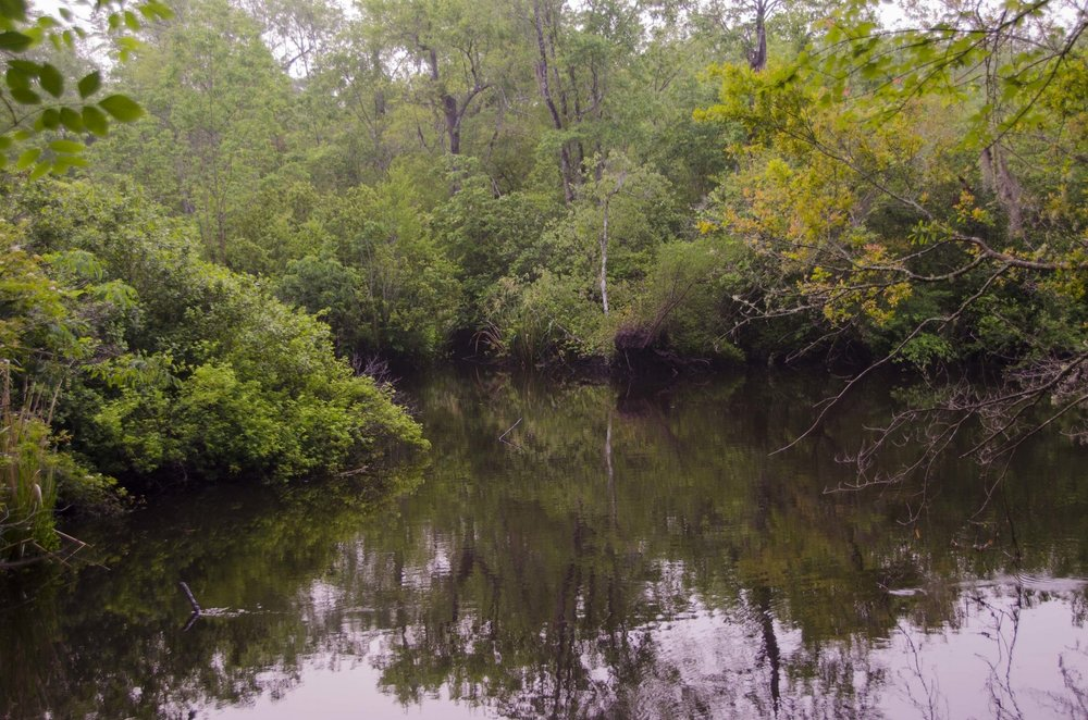 This view of the Edisto River is your reward for following the Edisto Nature Trail boardwalk to its end.