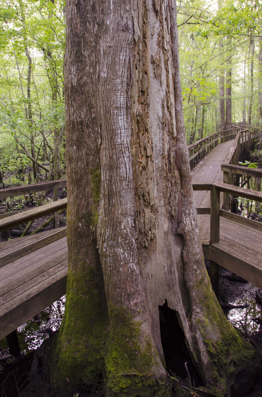 Edisto Trail best for Blog_1.JPG