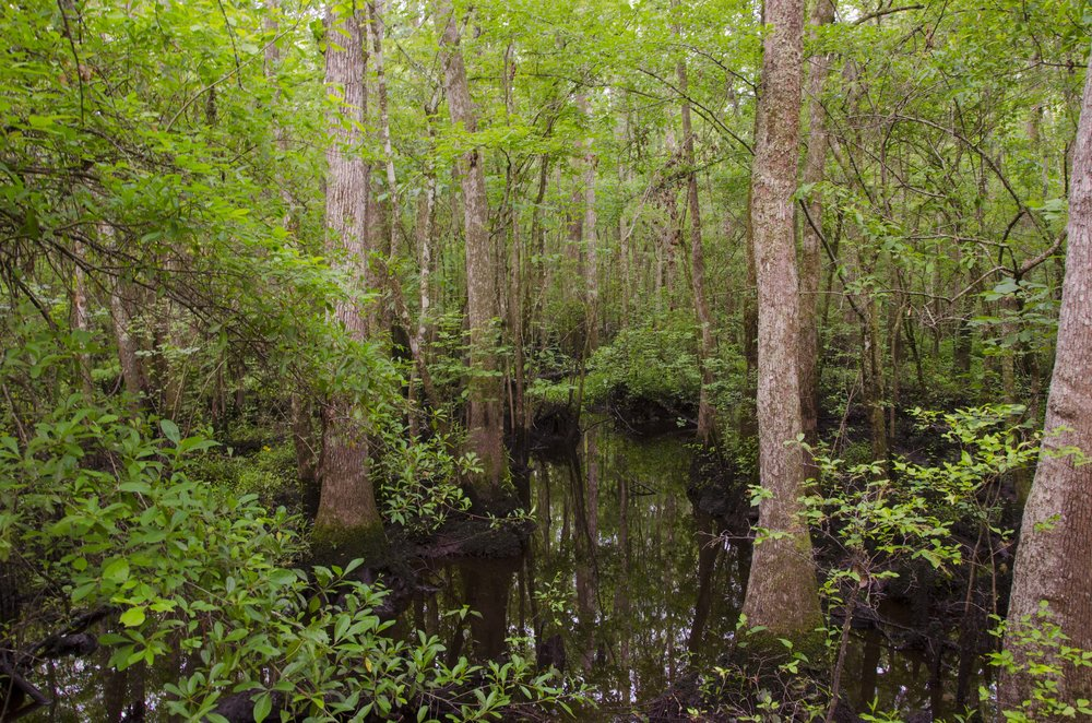 Edisto Trail best for Blog_2.JPG