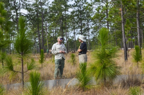 Dillman and a USFWS scientist talk about the next phase of the project while standing next to a low-walled pen used to habituate new arrivals to their surroundings.