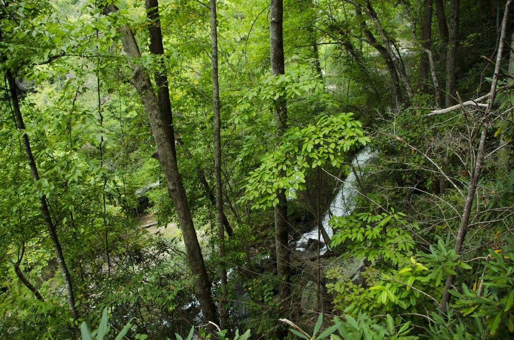 Reedy Cove Falls for Blog by DLucas_5.JPG