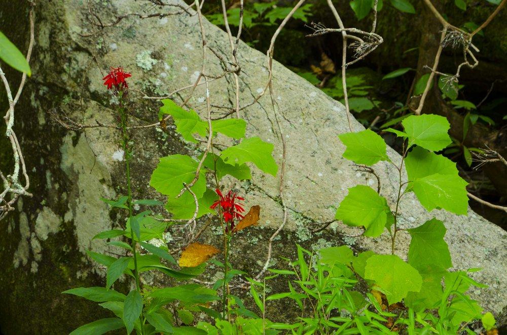Reedy Cove Falls for Blog by DLucas_10.JPG