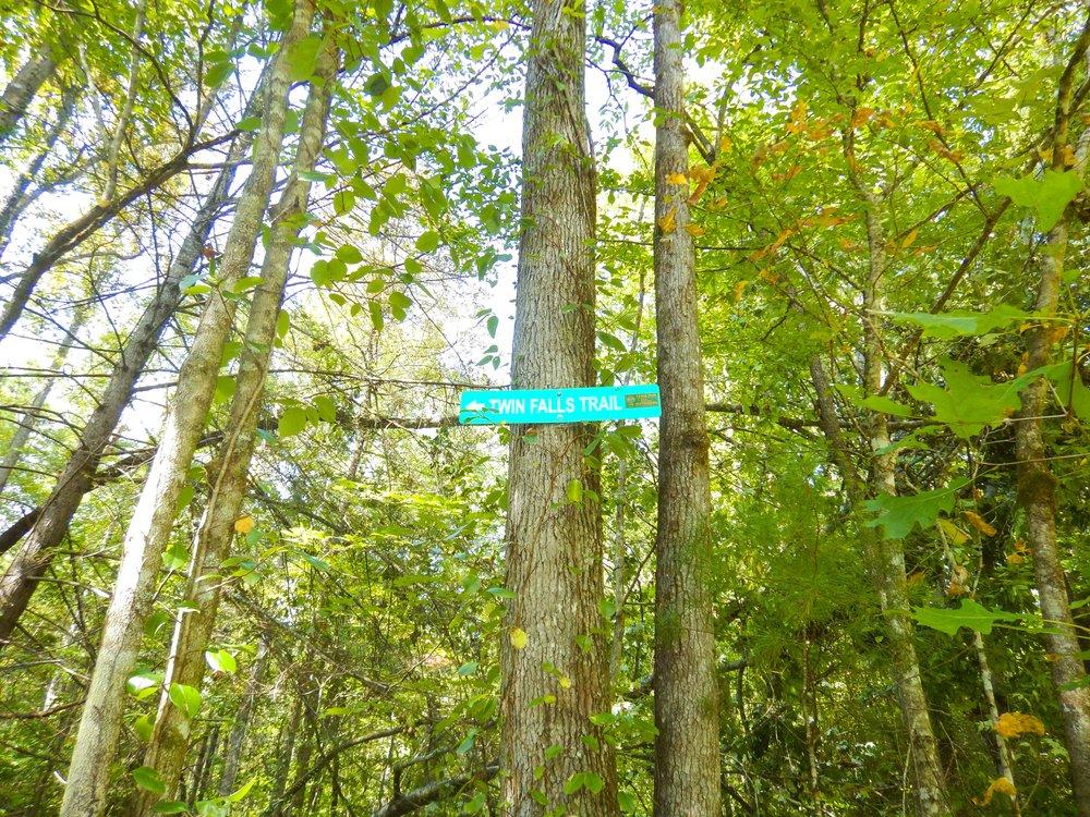 Reedy Cove Falls for Blog by DLucas_15.JPG