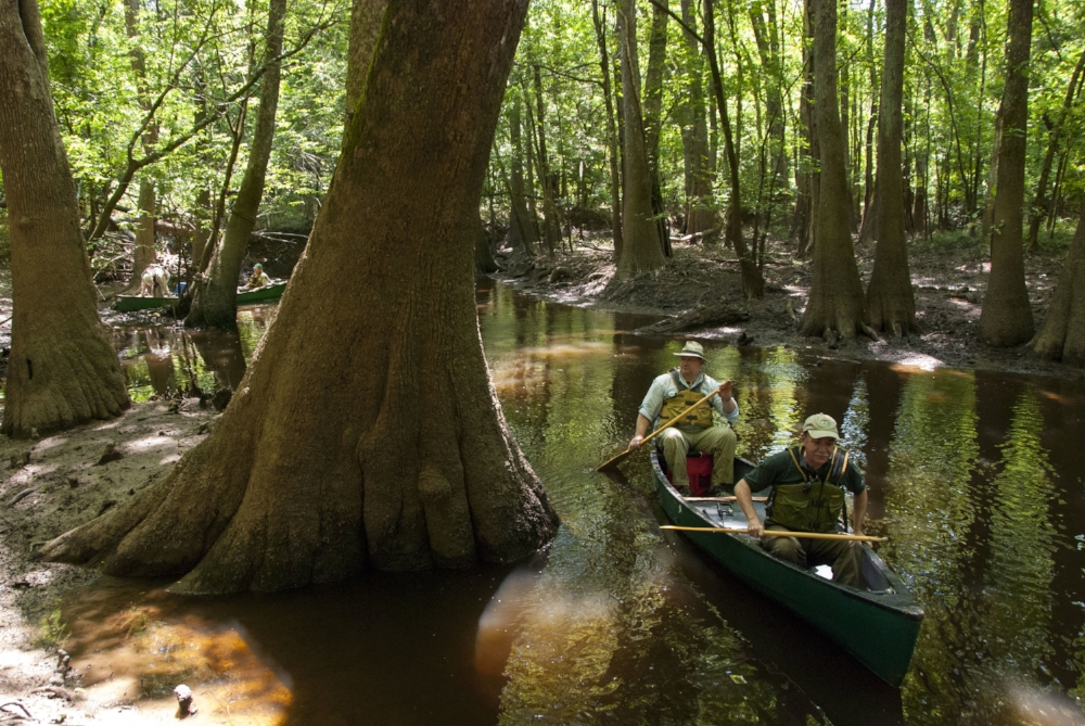 Congaree National Park is known for its big trees, and you'll see plenty of them on a paddle through the park on Cedar Creek.