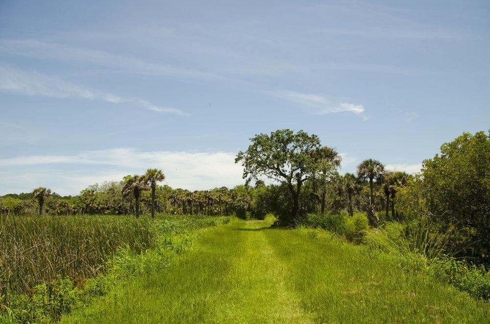 """The """"Turkey Walk"""" trail."""