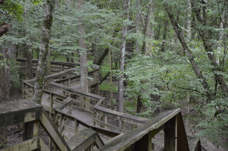 The boardwalk along the River is a great place to explore, with an amazing amount of bird life and other wildlife represented in the floodplain below.