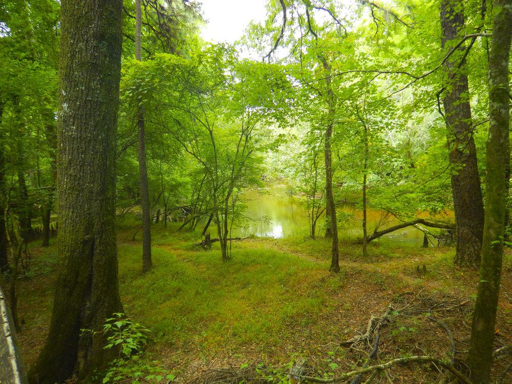 Lynches River Shots for Blog_39.JPG