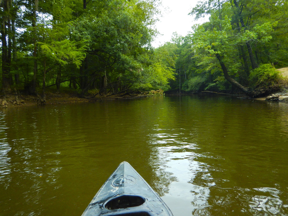 Lynches River Shots for Blog_19.JPG