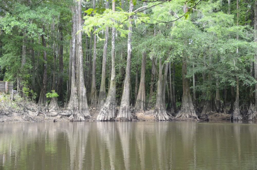 Lynches River Shots for Blog_2.JPG
