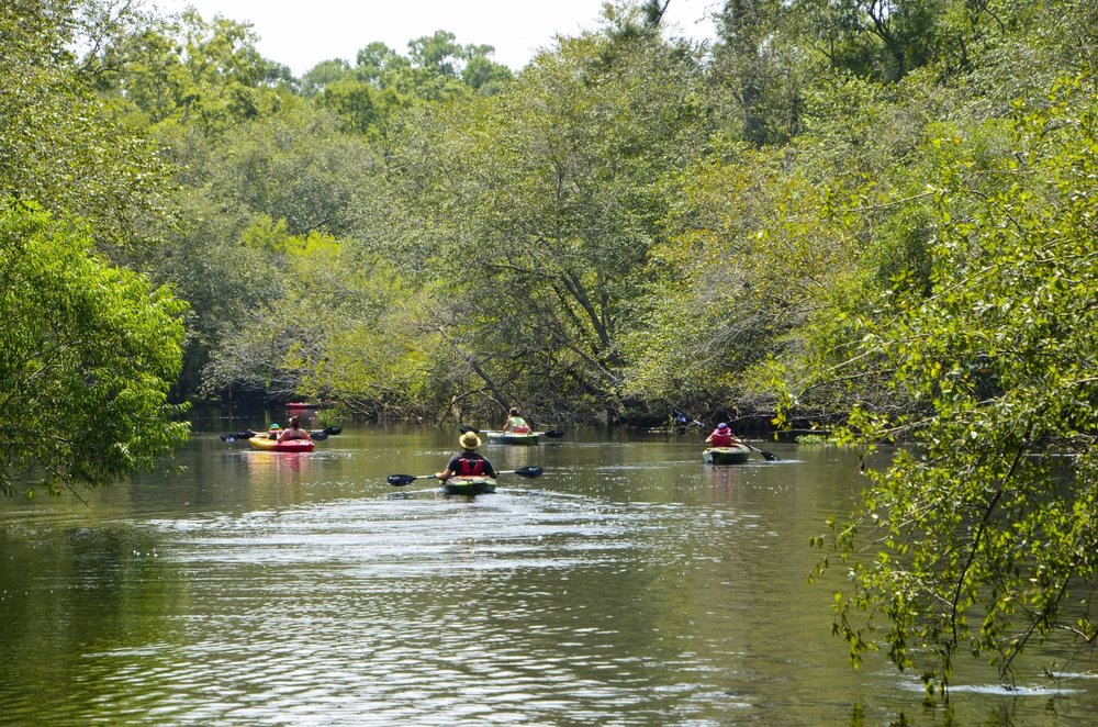 The Waccamaw River is a blackwater Paddler's paradise. [SCDNR image by David Lucas -- see complete photo gallery at the end of the article.]
