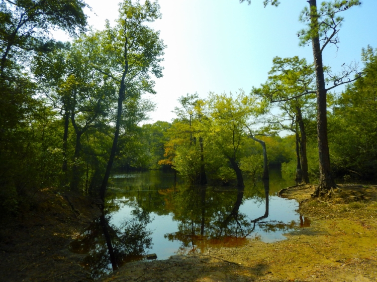 Big Savannah Bluff is a picturesque spot in the heart of the heritage preservewith plenty of opportunities for bank fishing, birdwatching and hiking. [SCDNR image by David Lucas -- see complete photo gallery at the end of the article.]