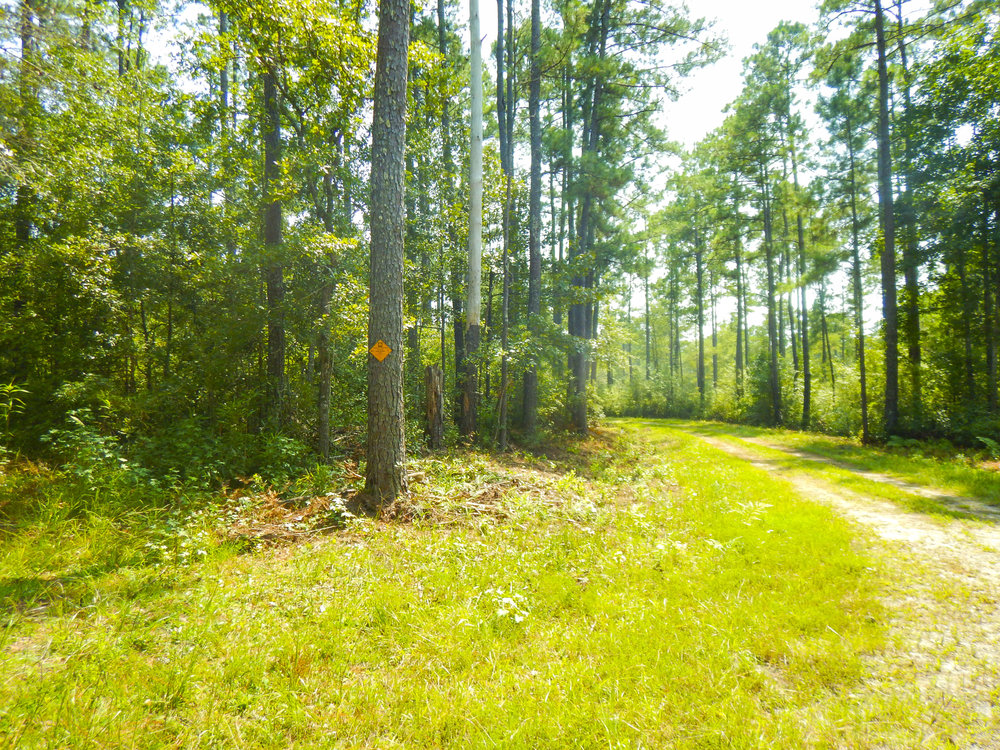 The preserve & WMA includes some egress roads, which can be used by hunters (check the SCDNR Rules and Regulations brochure for allowable seasons) or wildlife watchers and hikers.