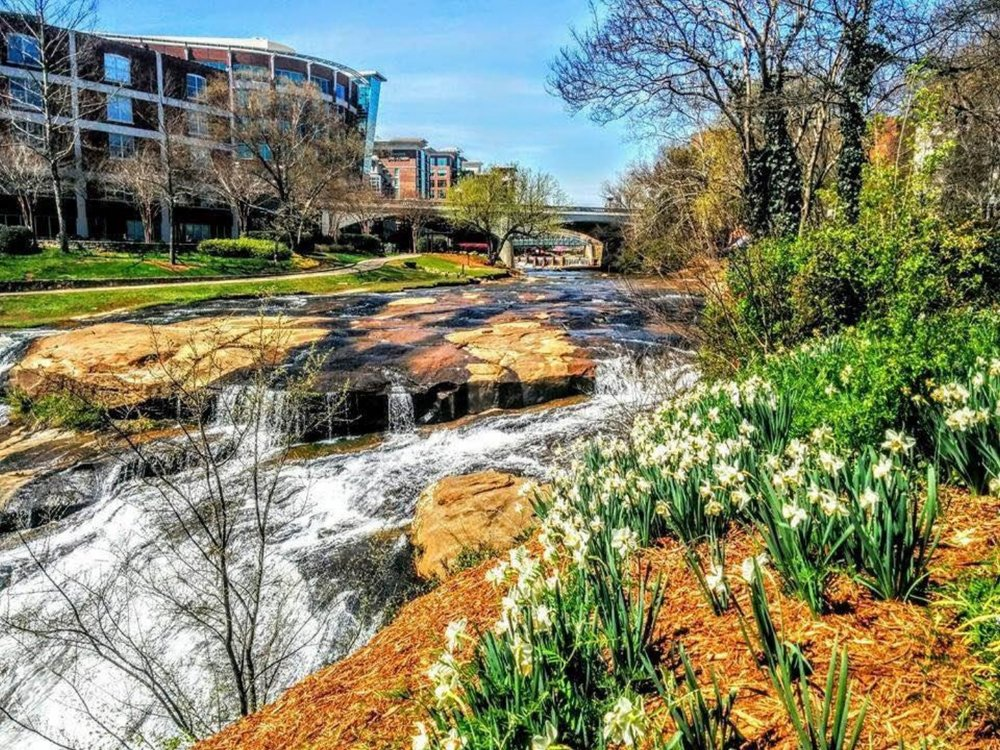 Wildflowers bloom along the banks of the Reedy River in downtown Greenville. [Photo courtesy Tina Zukaitis]