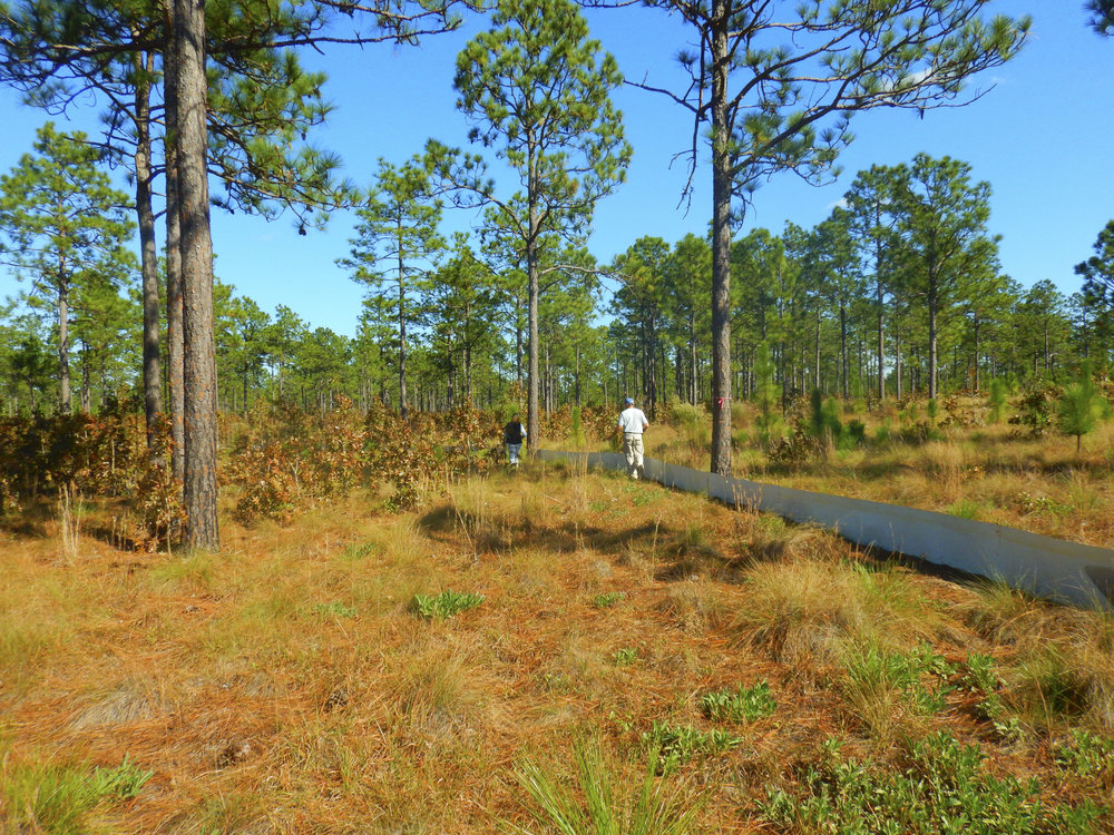 "The low metal fence that forms the 2.5-acre ""pen"" where the released tortoises will live out the next phase of their lives cuts through a section of the heritage preserve that has been carefully managed over decades to produce a longleaf pine-dominated habitat that meets the tortoise's (and many other species) needs."