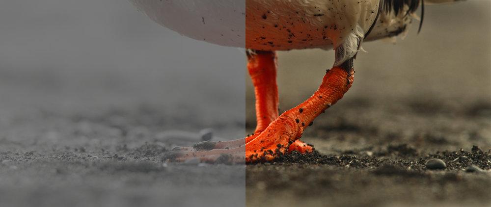 CoryJohnn Reel - Compare - 3.jpg
