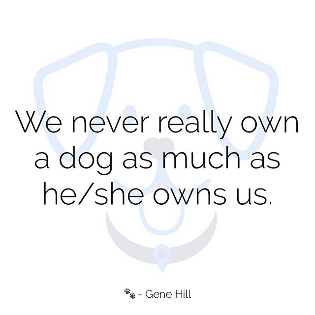 Who owns who?? 🐾❤️ #wednesdaywisdom #doglovers