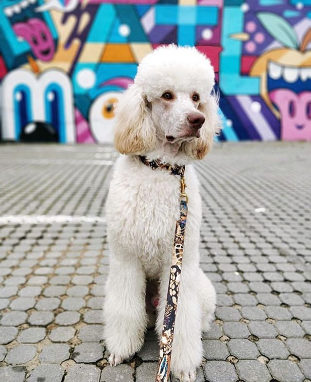 We have so many amazing murals in ATL!! Where is your favorite?? 💞🐶 @noodlethestandardpoodle found this great one by @gregmike! 🎉Take a photo by your fave and tag us! 🐾❤️ #atlart #artatlanta #mural 📸: @noodlethestandardpoodle