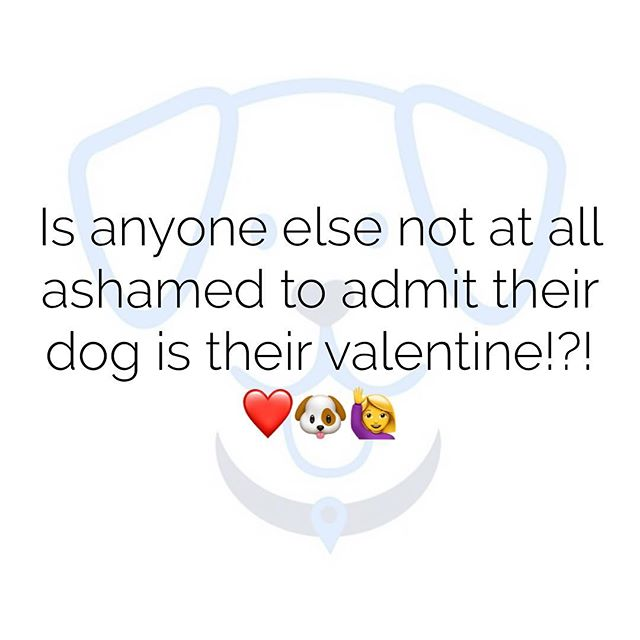 No shame in our puppy-love game 🐾❤️ #valentines #tuesdaythoughts #puppylove