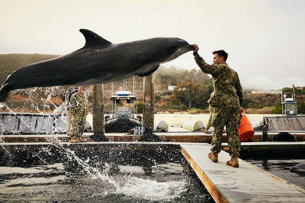 jeff-allen-web-us-military-140211-alex-27-dolphin-jump_rt.jpg